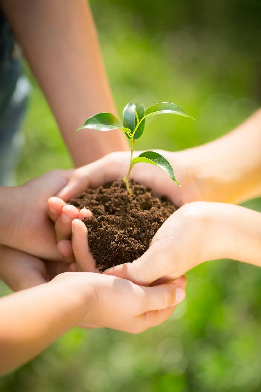 Een 2 paar kinderhanden die een klompje aarde beehouden met daarin een klein plantje.